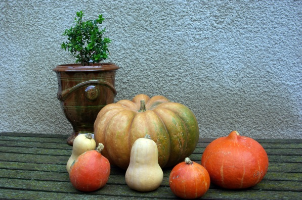 Courges, potiron, potimarrons