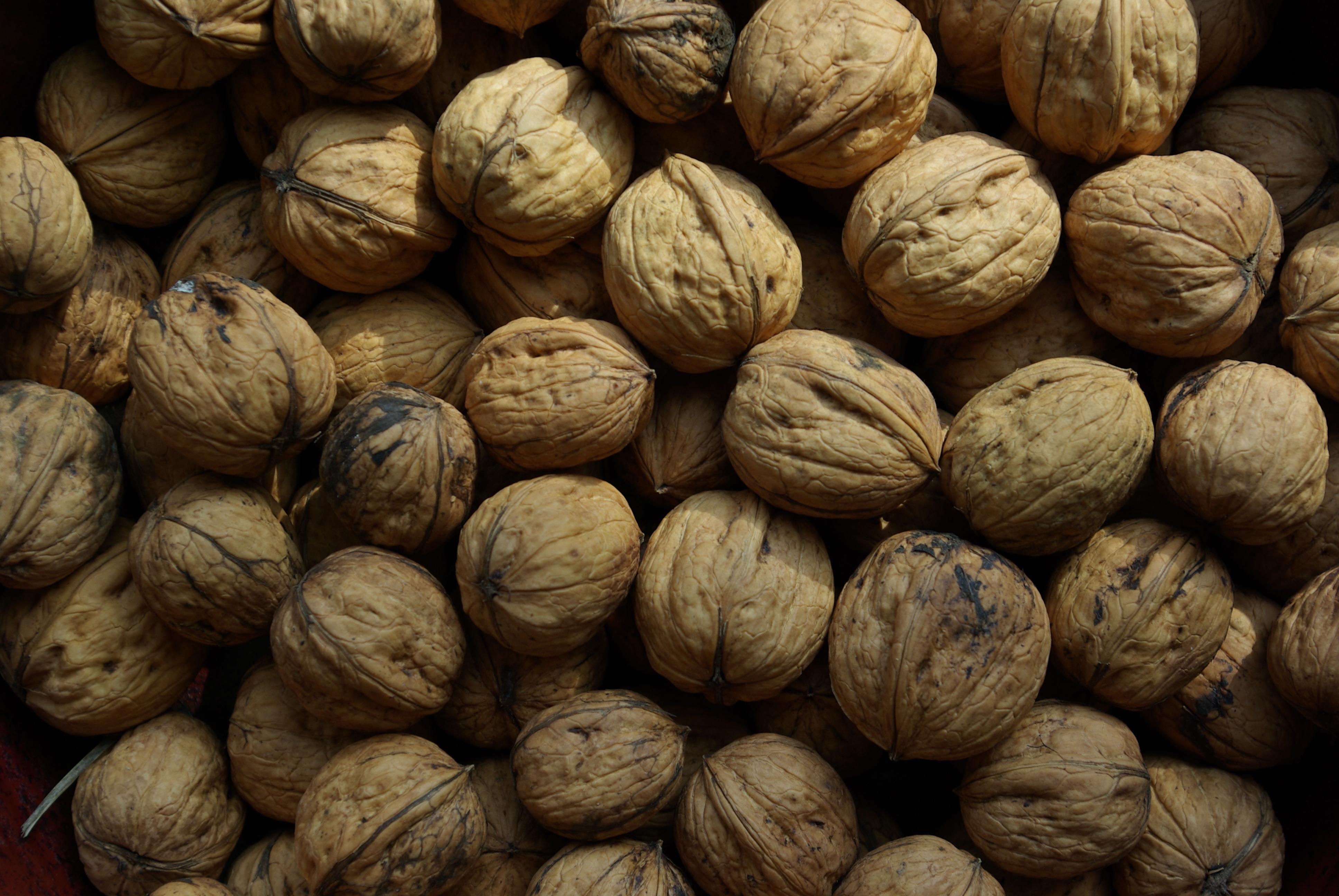 A la noix je dis tu dis il dit nous disons for Quand ramasser les noix