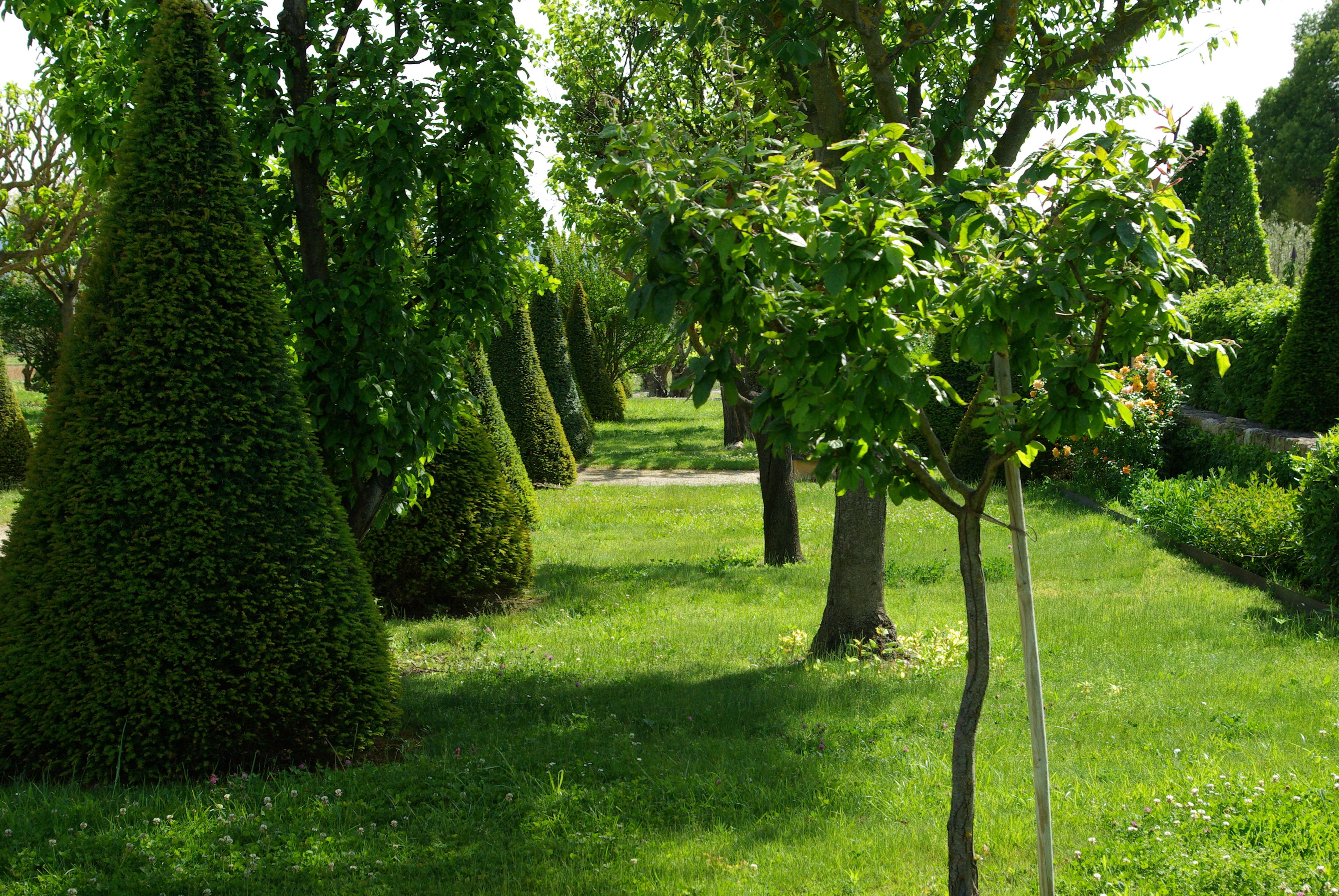 Un jardin en provence je dis tu dis il dit nous disons for Arbres decoratifs jardin