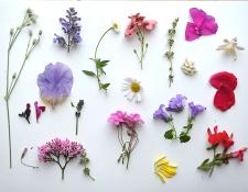Fleurs de mai1