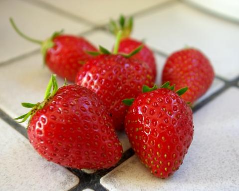 Premières fraises