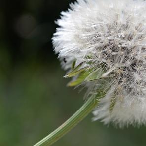 Souffler sur la fleur