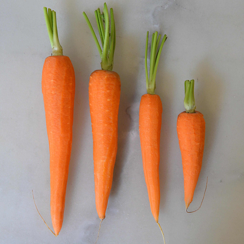 Carottes je dis tu dis il dit nous disons - Dessin de carotte ...