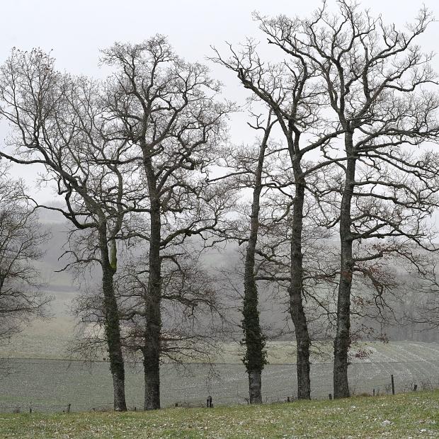 L'hiver1