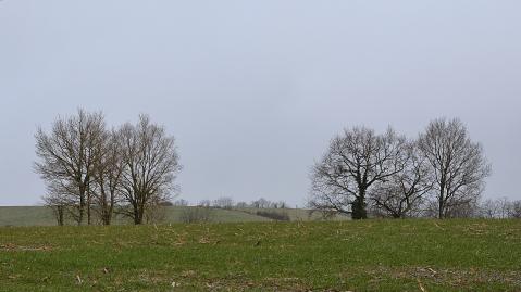 L'hiver et les arbres